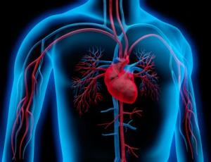 Medizin - Körper