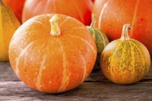 Groß, rund, lecker, gelb - Herbstgemüse Kürbis