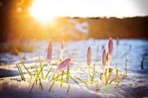 Schnee: Kältesturz