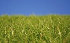 Pilze im Rasen – So werden Sie die Störenfriede wieder los!